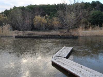 1月8日朝の池の様子